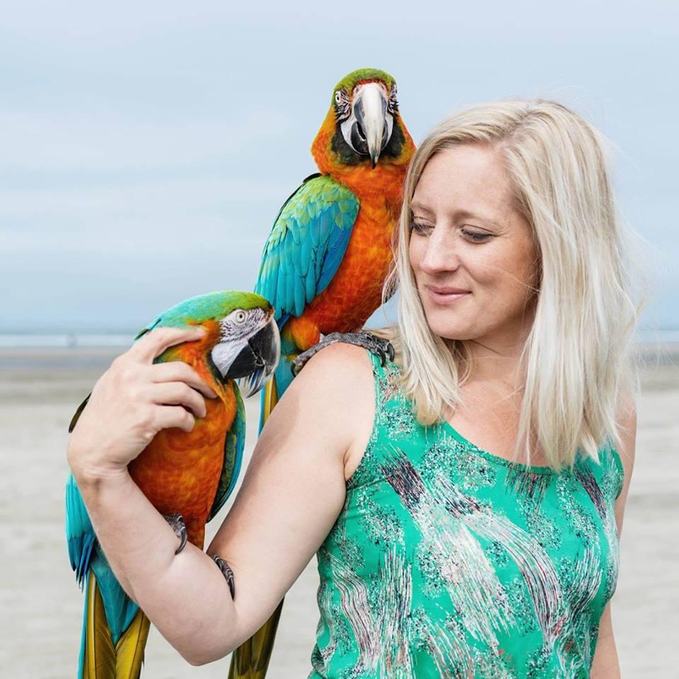 hh-parrots